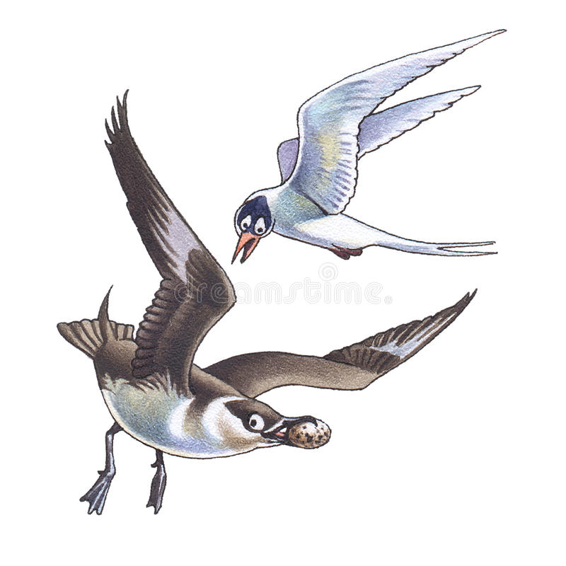 Download Skua and seagull_2 stock illustration. Image of ocean - 12739418