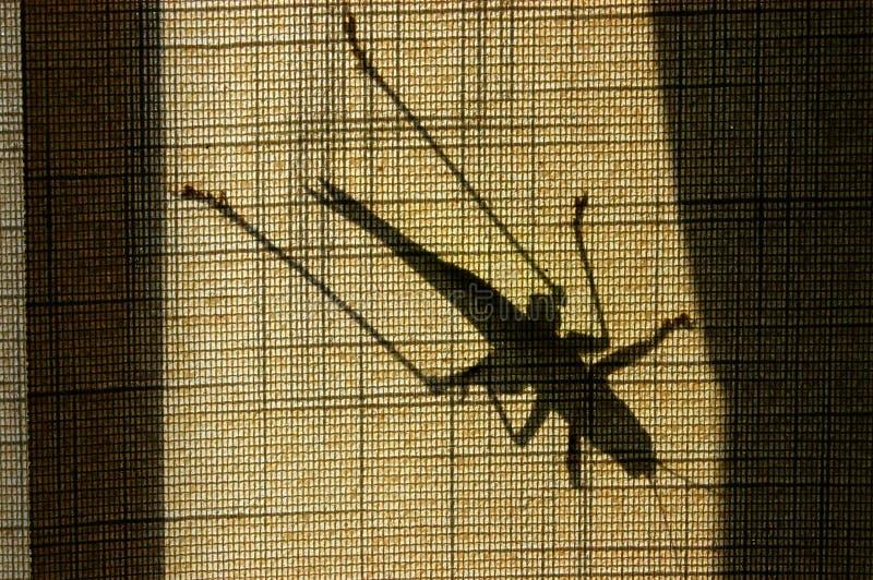 Skugga av ett jätte- kryp på fönstertygrullgardiner royaltyfri fotografi