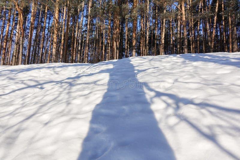 Skugga av ett stort träd i snön royaltyfria bilder