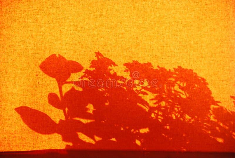 Skugga av fönsterblommor på en orange gardin royaltyfri fotografi
