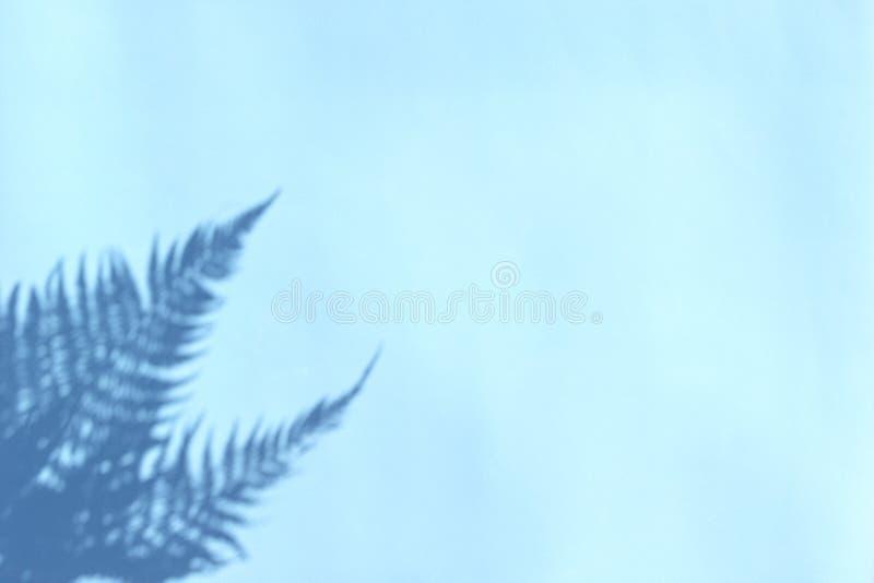 Skugga av filialer av ormbunkesidor på blå bakgrund Abstrakt tropisk bladbakgrund, sommarbegrepp royaltyfri foto