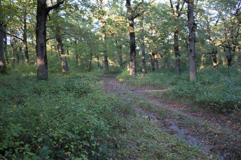 Skugga i skogen i höst, landskap av vägen i scenisk natur på nedgången och färgrika träd arkivfoto