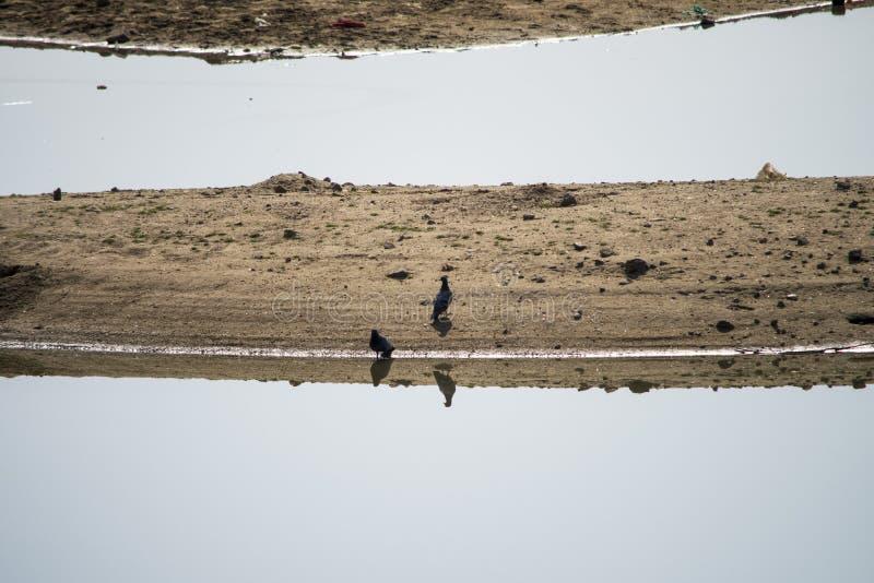 Skugga och reflexion arkivbild
