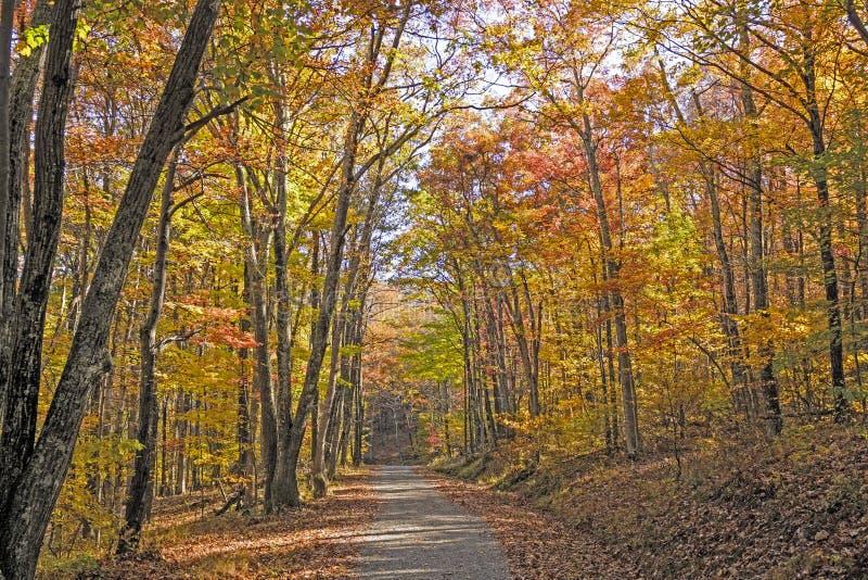 Skuggad bana i skogen i höst arkivbilder