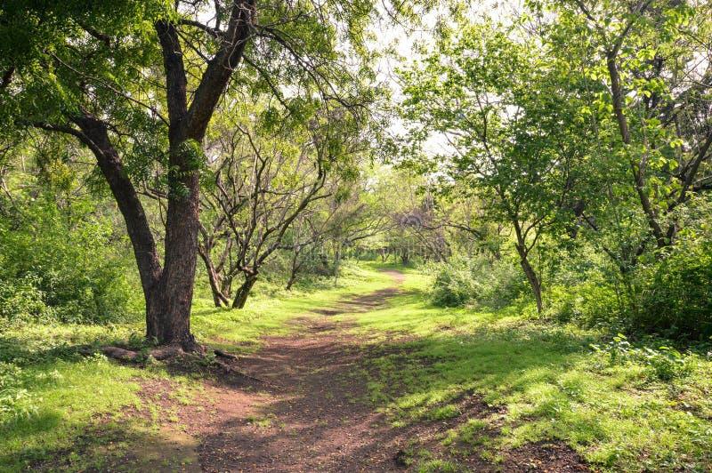 Skuggad bana under de frodiga gröna träden i parkera inom Leon V royaltyfri bild