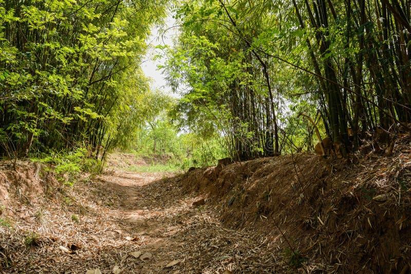 Skuggad bygdvandringsled i bambu på sen vårdag royaltyfria foton