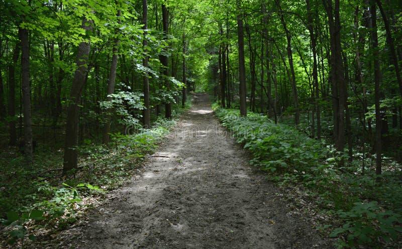 Skuggad högland Forest Trail royaltyfri foto