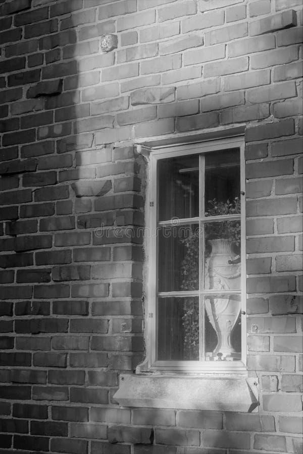 Skuggad vas i fönster arkivbild