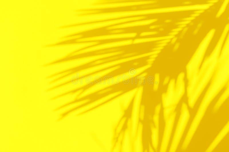 Skuggakontur av den härliga fjäderlika palmbladet i solljus på ljus solig gul färgväggbakgrund Tropisk sommar royaltyfri bild