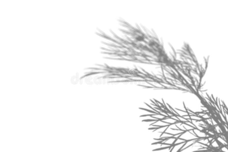Skuggan av fältgräset på den vita väggen Svartvit bild för fotosamkopiering eller modell royaltyfri bild