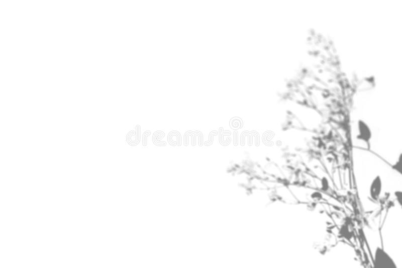 Skuggan av fältgräset på den vita väggen Svartvit bild för fotosamkopiering eller modell royaltyfri fotografi