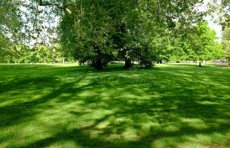 Skuggan av träd på gräs i en parkera under sommaren arkivfoto