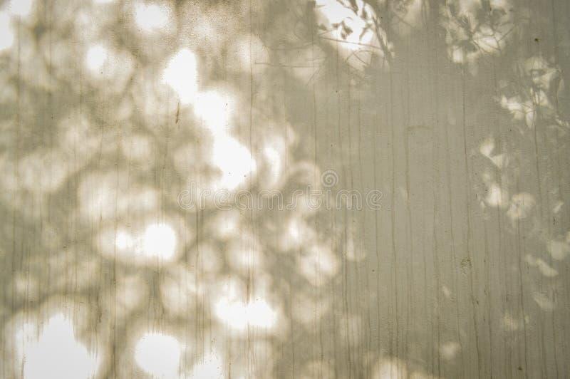Skuggan av trädsidor på betongväggen, bakgrund royaltyfria bilder