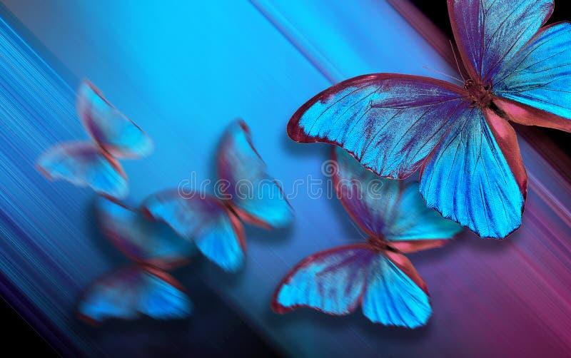 Skuggar av bl?tt abstrakt suddighet bakgrundsblue Blå fjärilsmorpho på en suddig blå bakgrund Kopieringsutrymmen royaltyfri bild