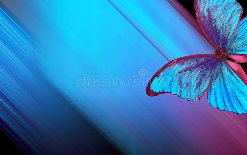 Skuggar av bl?tt abstrakt suddighet bakgrundsblue Bl? fj?rilsmorpho p? en suddig bl? bakgrund Kopieringsutrymmen royaltyfri fotografi