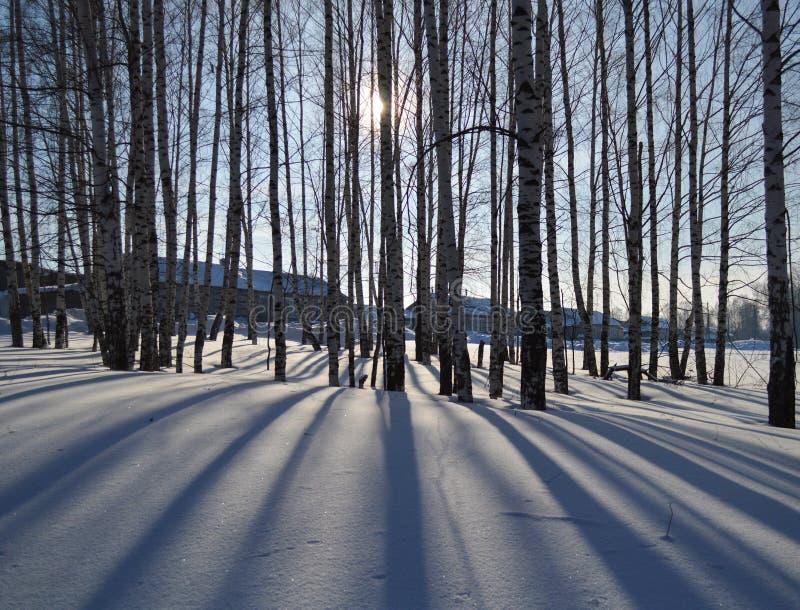Skuggar på snowen fotografering för bildbyråer
