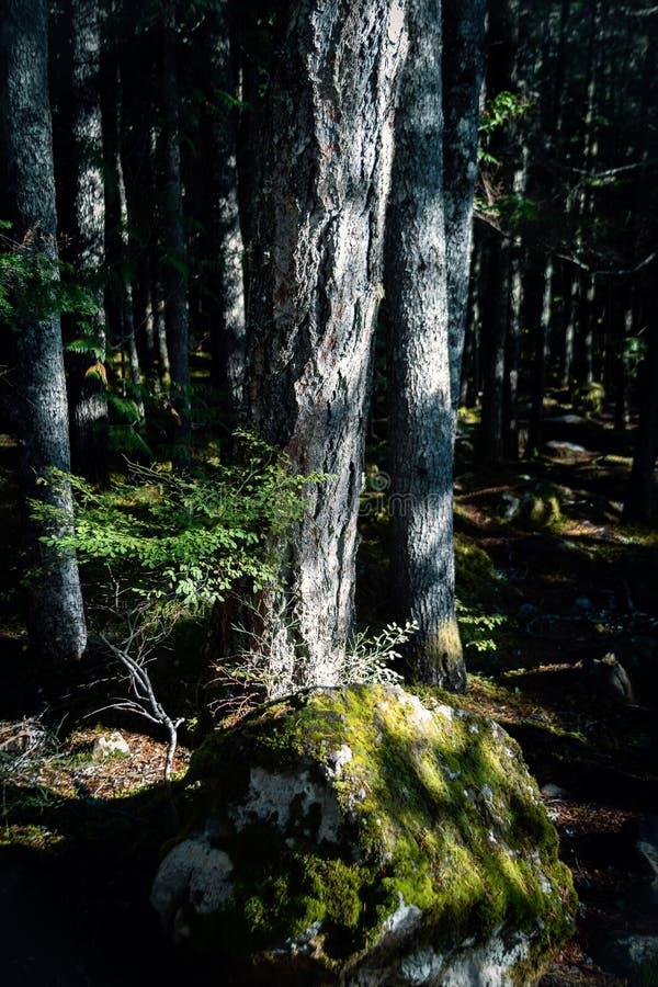 Skuggig skog i fläckigt ljus royaltyfria bilder