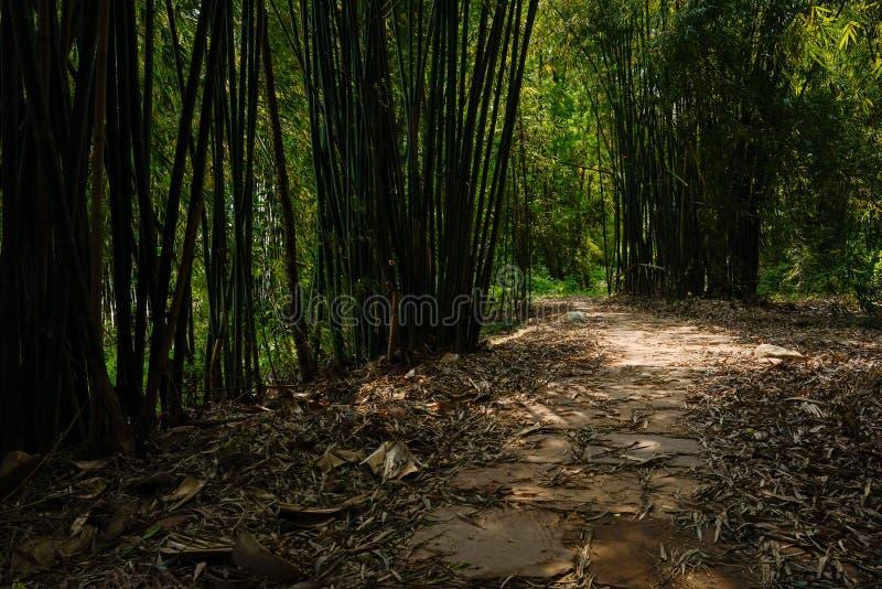 Skuggig stenhäll-stenlagd bana i bambu av den soliga sommareftermiddagen royaltyfri foto