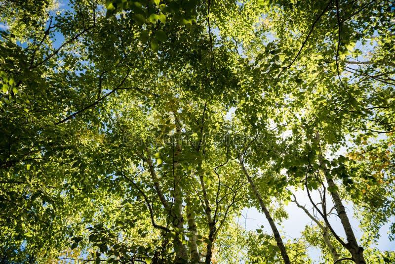 Skuggig vertikal sikt av träd- och bladmarkisen royaltyfri bild