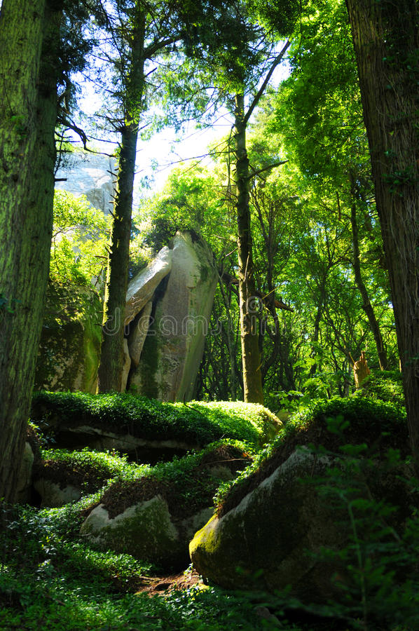 skuggning skog royaltyfri bild