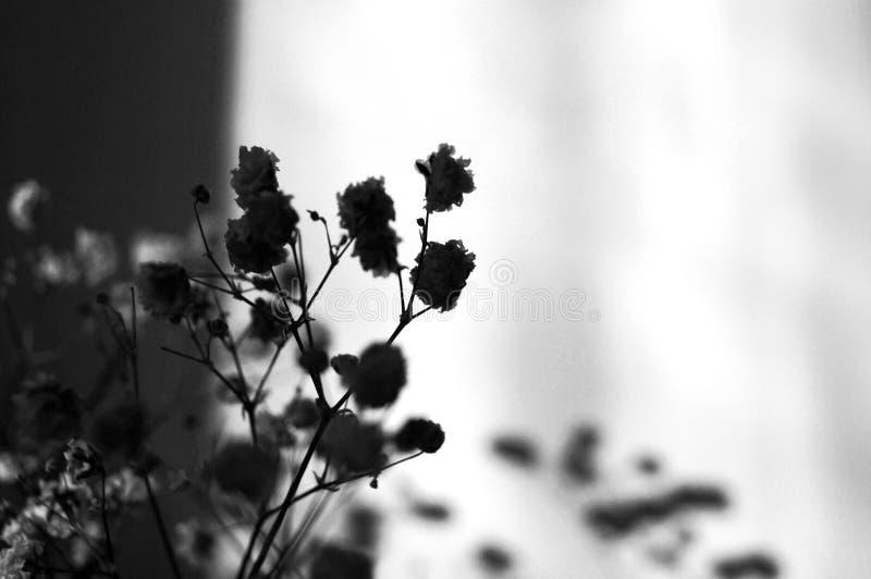 Skuggor av blomningen royaltyfria bilder