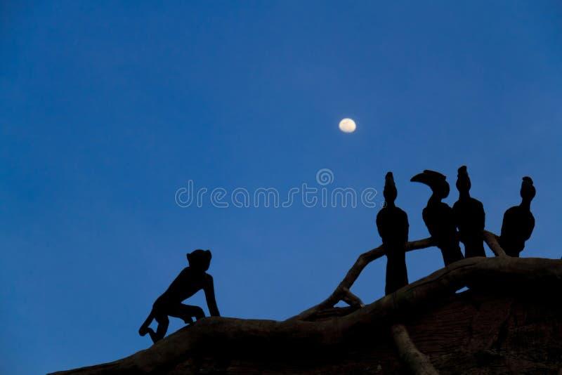 Download Skuggor av fåglar arkivfoto. Bild av natt, angus, wild - 27285548