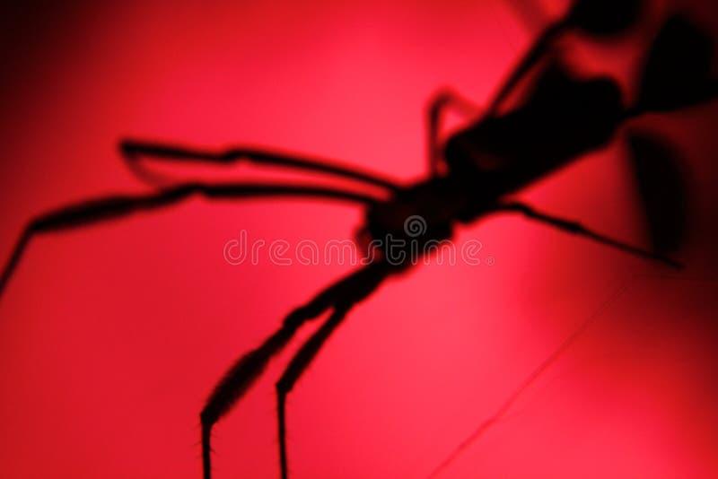 Skuggor av skrämmer den stora spindeln royaltyfri bild