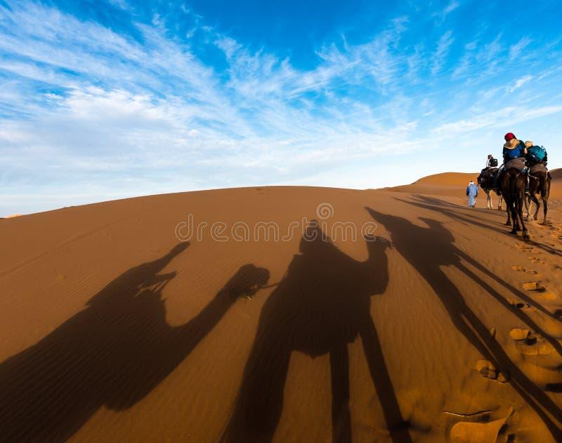 Skuggor för sen eftermiddag av den dromedarkamel och husvagnen ledde vid Tuaregmannen i Merzouga, erget Chebbi, Marocko arkivbild