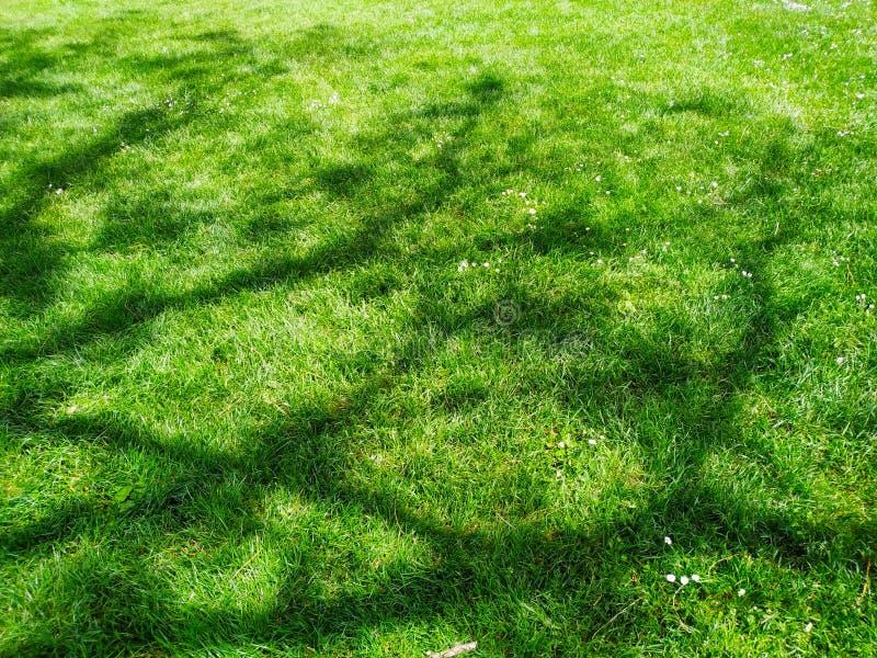 Skuggor på grönt gräs efter regnet i morgonen arkivbilder
