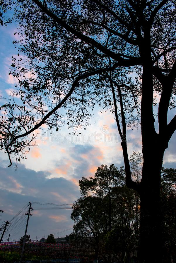 Skuggorna av solnedgången royaltyfria bilder