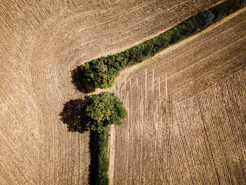 Skuldraskarv i ett fält fotografering för bildbyråer