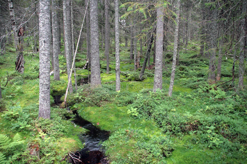 Skuleskogen Nationaal Park stock foto's