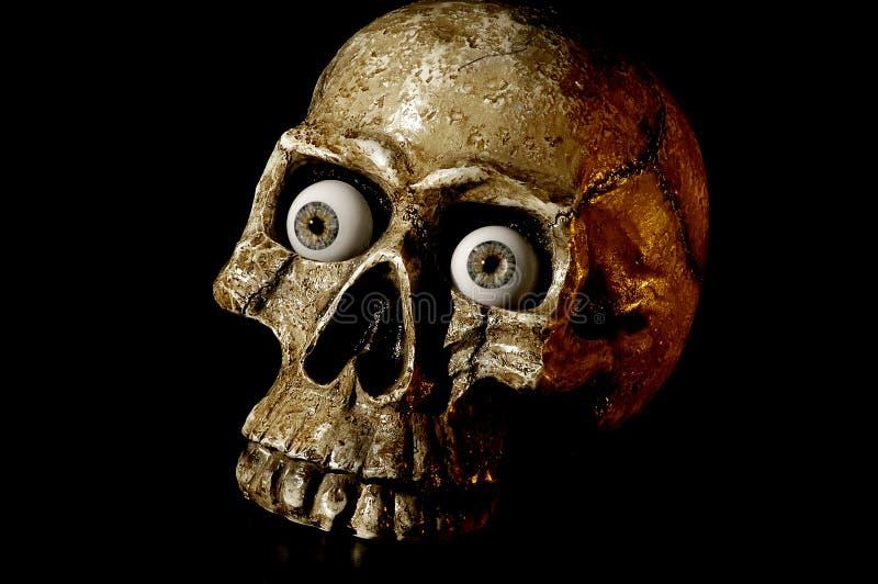 Download Skull 1 stock photo. Image of skull, ghastly, bones, frightening - 1257954