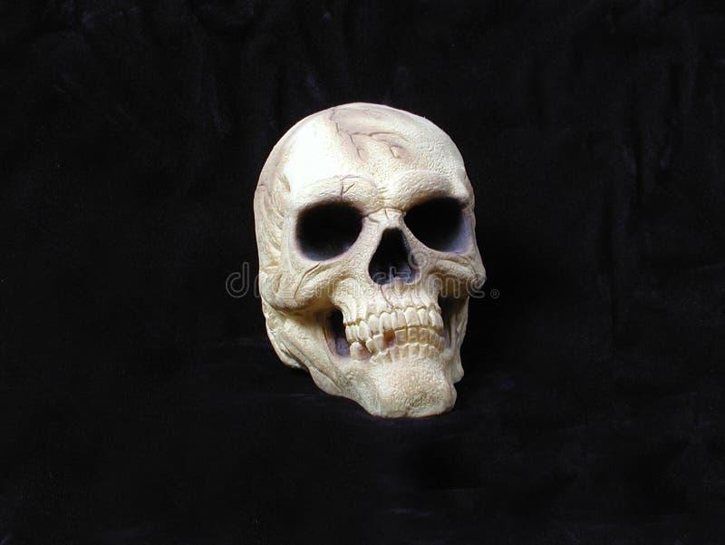 Skull vector illustration