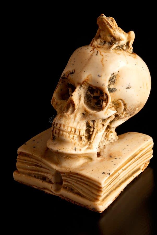 Download Skull stock photo. Image of book, salamanca, burial, medieval - 14146290