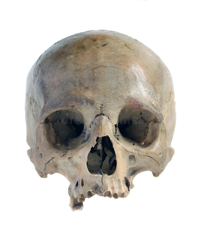 Skull. Skull of the person close-up on a white background royalty free stock image