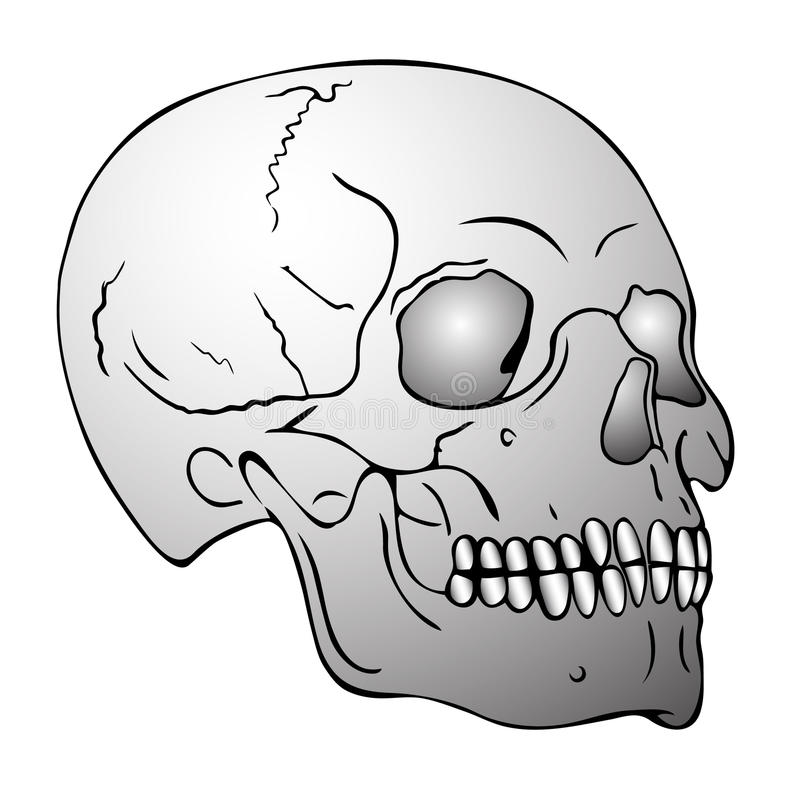 Download Skull stock vector. Illustration of people, skeletons - 17519626