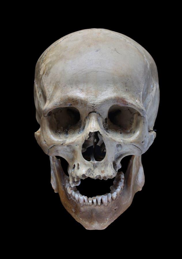 Free Skull Royalty Free Stock Photos - 19167478