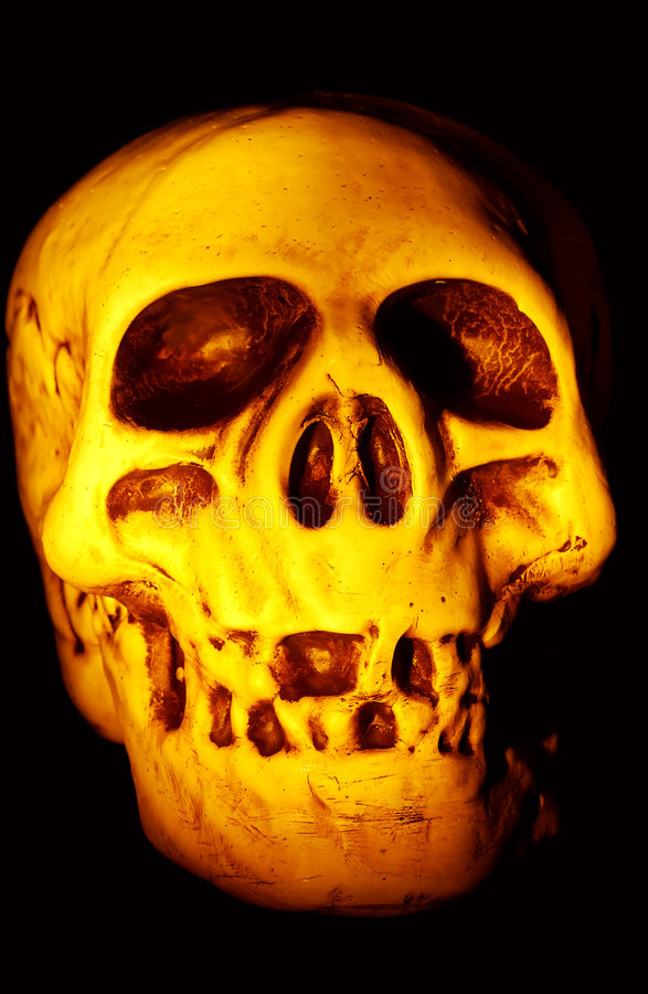 Download Skull stock photo. Image of parts, bones, body, jawbone - 199694