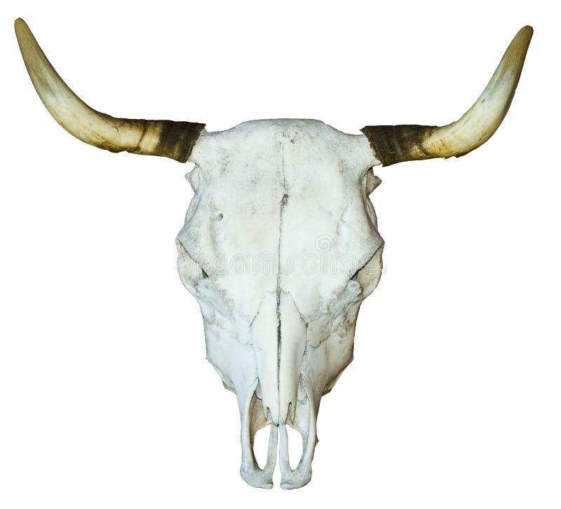 Free Skull Stock Photos - 19979043