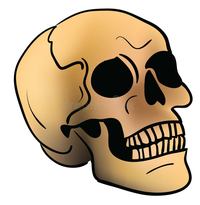 Download Skull stock vector. Image of scary, medical, isolated - 21482123