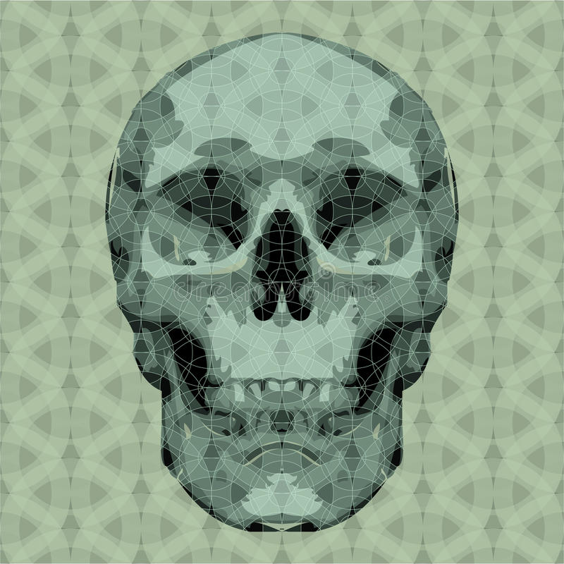 Skull stock illustration