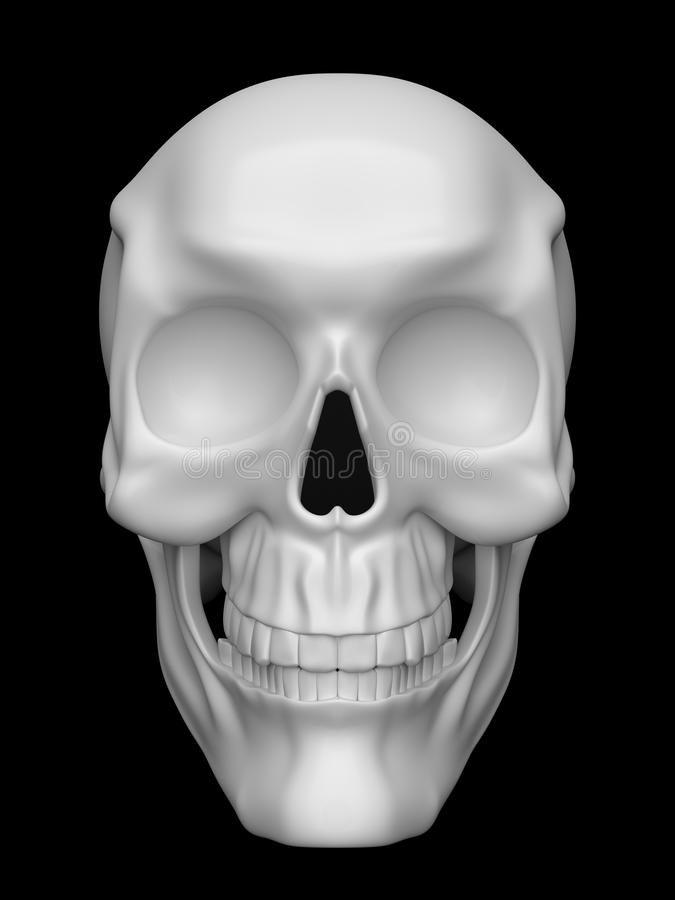 Skull royalty free illustration