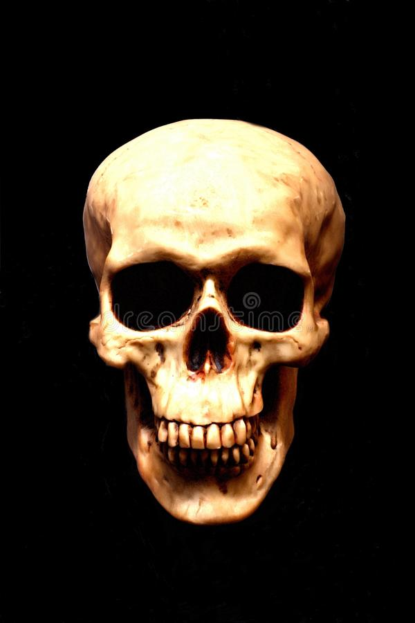 Free Skull Royalty Free Stock Photography - 34534197
