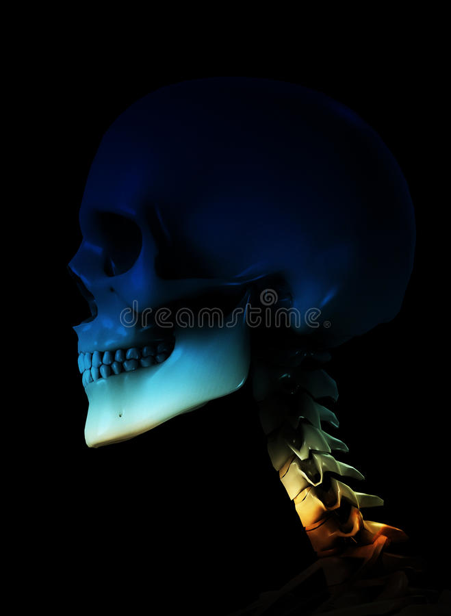 Download Skull stock illustration. Image of healthcare, dead, haunted - 9486397
