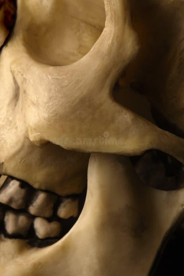 Skull abstract stock photo