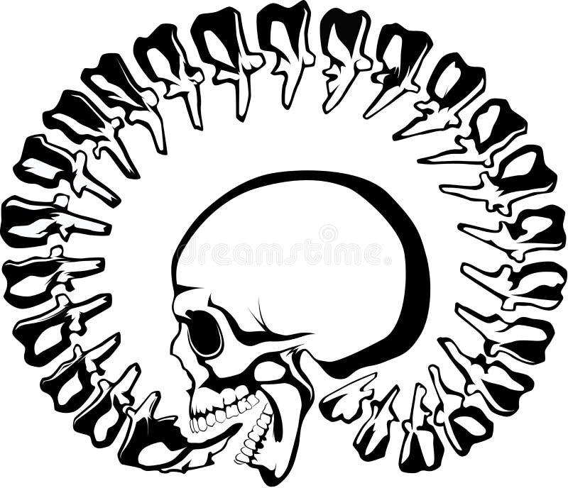 Skull, backbone. Skull with circular backbone, originally symbol for immortal (but with dragon vector illustration
