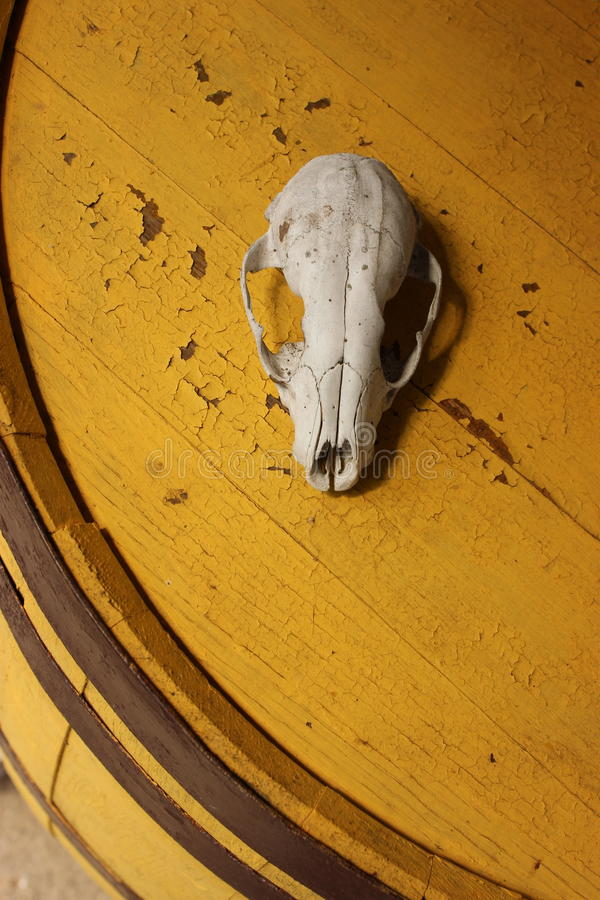 Skull on Barrel royalty free stock photos