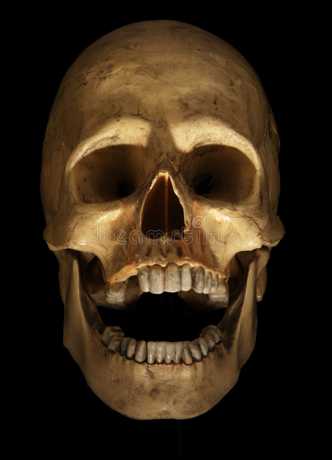 Skull on black stock photography