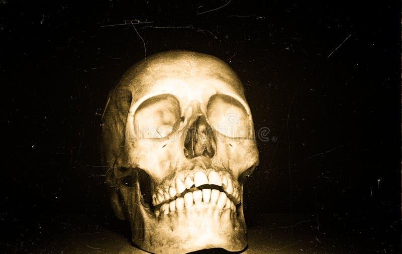 Skull on black backround royalty free stock photo